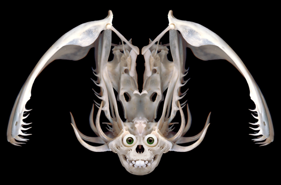 skullface2.jpg