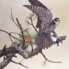 hobbyandswallow