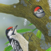 lesserspottedwoodpeckers