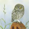 littleowl2