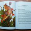 mauricepledgerbook1