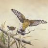 swampharrier+spottedcrake