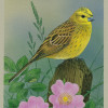 yellowhammersmall